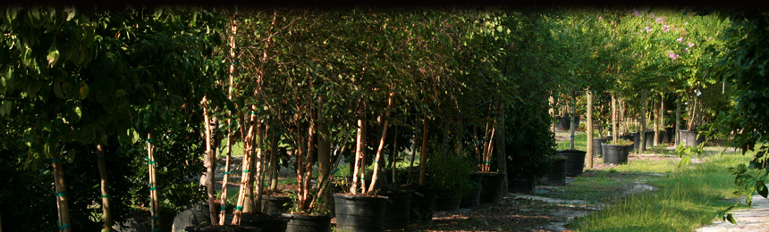 Plant And Tree Nursery In Jacksonville Fl Williams