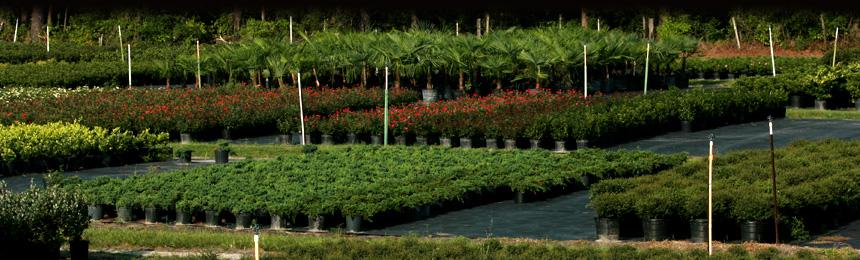 Plant And Tree Nursery In Jacksonville Fl Williams